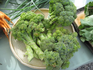 Organic Broccoli at Choice Roots in Springfield, Illinois.