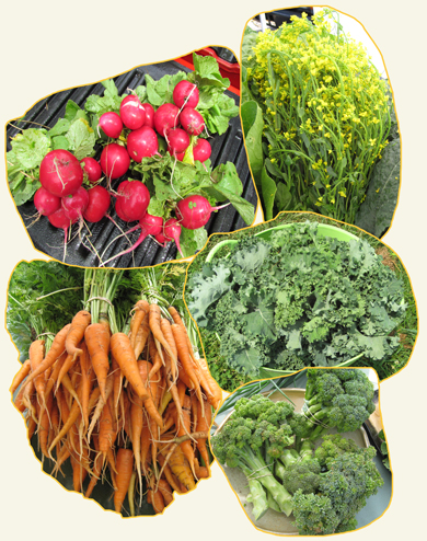 Choice Roots offers a variety of produce, including various greens, vegetables, and fruits during the year.