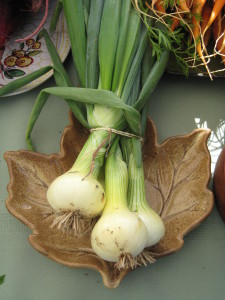 Onions at Choice Roots